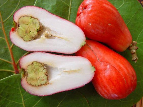 Choisir et conserver ses pommes malacas bianca au naturel - Conserver pommes coupees ...